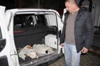 HAYVAN SEVERLER - Bodrum'da Köpek Katliamı