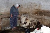 HAYVAN - Gaziantep'te 20 Günde Onlarca Hayvan Telef Oldu