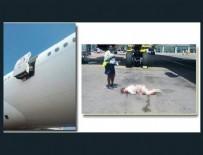HAVAYOLU ŞİRKETİ - Hostes uçaktan düştü!