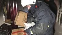 İTFAİYE ERİ - İtfaiye Eri Evde Çıkan Yangından Etkilenen Kedileri Kurtarmak İçin Kalp Masajı Yaptı