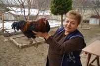 EMEKLİ MEMUR - Bahçesinde Beslediği Tavuk Horoza Dönüştü