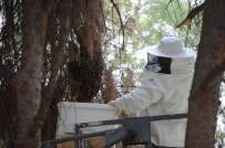Parktaki Ağaca Konan Arılar Vatandaşları Soktu