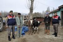 GÖRME ENGELLİ - Konya'da Çalınan İnekler Görme Engelli Sahibine Teslim Edildi