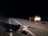 KARAYOLLARI - Otomobilin çarptığı at telef oldu
