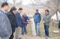 KAZANKAYA - Sertifikalı Ceviz Fidanlarında Damızlık Ünite Tespitleri