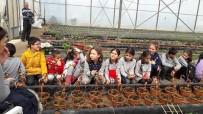 İLKÖĞRETİM OKULU - 'Toprakla Tanış Bitkiyi Sev' Projesi Sayesinde İlk Kez Fidanla Tanıştılar