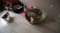 HAMZABEYLI - Yurda Kaçak Getirilen Köpekler Açık Artırmayla Satılacak