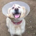 SARIYER BELEDİYESİ - 'Cindy' Köpeğin Dövülmesi Davasında Sarıyer Belediyesine Suç Duyurusu