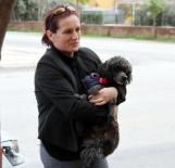 PETSHOP - Kayıp Köpeğin Sahibini Bulmak İçin Sokak Sokak Dolaştı
