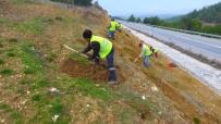 GELENBE - Manisa'nın Yol Kenarlarına 800 Km'lik Yeşil Kuşak