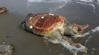Yalova Sahilinde Ölü Caretta Caretta Bulundu