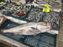 ÇAY KAŞIĞI - 20 Kiloluk Kötek Balığı Yıllar Sonra Akçakoca Tezgahlarını Süsledi