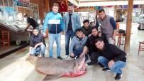 YEŞILOVACıK - Mersin'de 400 kiloluk köpek balığı yakalandı