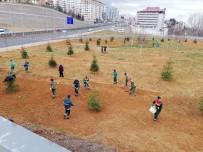 ÇINAR AĞACI - Trabzon'un Güzelleşmesi İçin 114 Bin 307 Ağaç Dikildi
