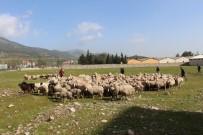 ABDURRAHMAN DEMIREL - Afrin'deki Mehmetçiğe 300 Kurban