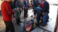 SU ÜRÜNLERİ - Akdeniz'in En Büyük Köpek Balığı Yakalandı