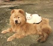 Düşmanlık Yok Dostluk Var
