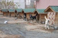 SOKAK HAYVANLARI - Sokak Hayvanlarına Şefkat Eli