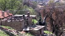 CANER YıLDıZ - Yangında Zarar Gören Alana 7 Bin Zeytin Fidanı