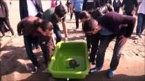 CARETTA CARETTA - Yeşil Deniz Kaplumbağasına Hayat Veren Müdahale