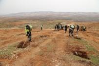 RıDVAN FADıLOĞLU - 16. Etap Bi Dünya Yeşil Ormanı Kuruluyor