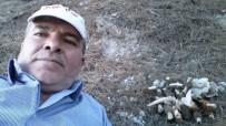 ALMANYA - Akdağ'da 'Kuzu Göbeği Mantarı' Bereketi