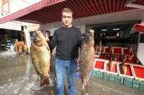AYNALı SAZAN - Beyşehir'de Baraj Balıkları Tezgahtaki Yerlerini Aldı