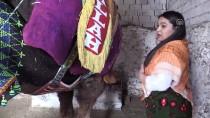 GAYRİMENKUL - Bodrum'un Kadın Devecileri