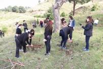 HÜSEYIN ÖNER - Burhaniye'ye 150 Fıstık Çamı