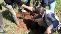 ENFORMASYON - Filistinliler 'Toprak Günü' Münasebetiyle Ağaç Dikti