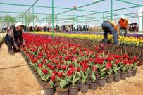 HASAN BASRI GÜZELOĞLU - Kayapınar'da 2 Milyon Çiçek Toprakla Buluşturuyor