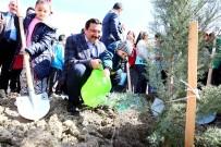 BAHAR BAYRAMı - Nevruz'da 2 Bin 071 Fidan Toprakla Buluşturuldu
