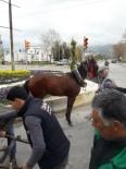 İSMAİL HAKKI - Atın Özgürlük Mücadelesi Böyle Bitti
