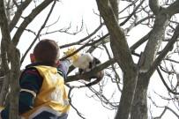 SOKAK HAYVANLARI - Eyüpsultan'da Ağaçta Mahsur Kalan Kediyi, Veteriner Ekipleri Kurtardı