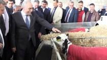 AHMET EŞREF FAKıBABA - Gıda, Tarım Ve Hayvancılık Bakanı Fakıbaba Açıklaması