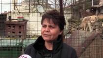 KÖPEK YAVRUSU - İhaleyle Satışa Çıkarılan Kaçak Köpek Yavruları Satılamadı