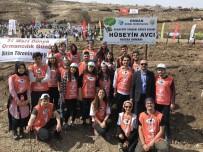 FARKıNDALıK - PAÜ Genç TEMA Topluluğu 500 Fidanı Toprakla Buluşturdu
