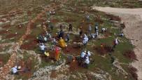 ORMAN GENEL MÜDÜRLÜĞÜ - Türkiye'nin İlk Zeytin Ormanı Kuruldu