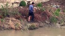 Yeşilırmak'ta Toplu Balık Ölümleri Görüldü
