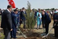 İNSANOĞLU - Kahramanmaraş'ta 'Şehitler Ormanı' Kuruldu
