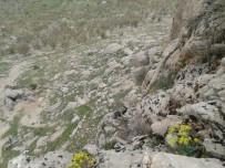 DUMLU - Kayalıklarda Mahsur Kalan Keçiler Kurtarıldı