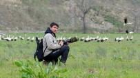 DOĞA FOTOĞRAFÇISI - Baharın Müjdecisi Leylekler İstanbul'a Gelmeye Başladı