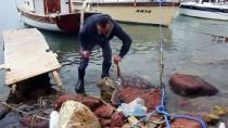 BITEZ - Bodrum'da Ölü Caretta Caretta Sahile Vurdu