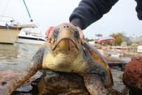 BITEZ - Dev Deniz Canlısı Karaya Vurdu, Görenler Şok Oldu