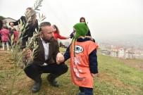 ÇAM AĞACI - İzmit'te Zeytin Dalı Hatıra Ormanı Kuruldu