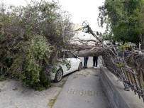 GENÇLIK PARKı - Tarsus'ta Fırtına Etkili Oldu