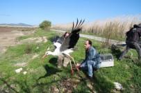 İZMIR DOĞAL YAŞAM PARKı - Yaralı Leylekler İyileştirilip Doğaya Salındı