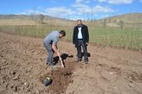 ARİF KARAMAN - Adilcevaz'da Örnek Ceviz Bahçesi Kuruldu