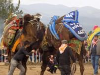 MUSTAFA BÜYÜKYAPICI - Afrin Harekatı Unutulmadı, Develer Zeytin Dalıya Güreşti