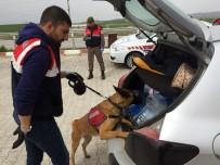 UYUŞTURUCU KAÇAKÇILIĞI - Jandarmadan Köpekli Yol Denetimi